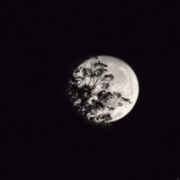8467-supermoon_november_2016_-sean_costello