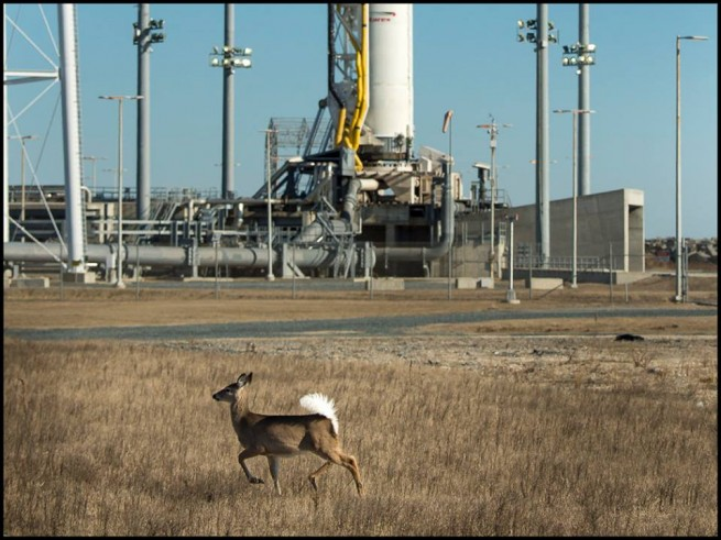 Chilly temps did not prevent the local wildlife from roaming around Antares. Photo Credit: Bill Ingalls / NASA