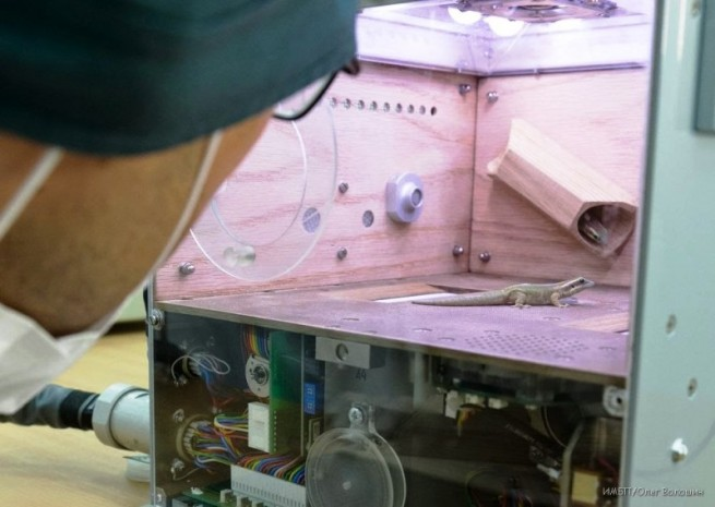 Geckos before Foton-M4 capsule launch. Photo Credit: IMBTT / Oleg Voloshin