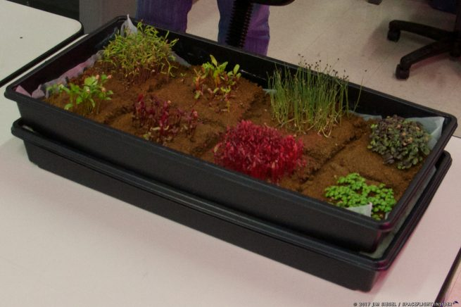 Space farming - microgreens