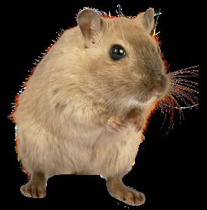 Mouse transparent PNG credit PNGPix